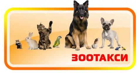 Перевозка животных - ЗооТакси